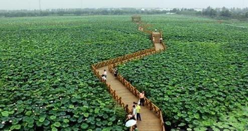 现代农业生态观光园【相关词_现代休闲农业生态园】图片